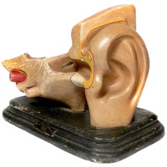 Early Anatomical Model of the Ear