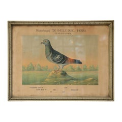 Belgian Colored Framed Pigeon Engraving