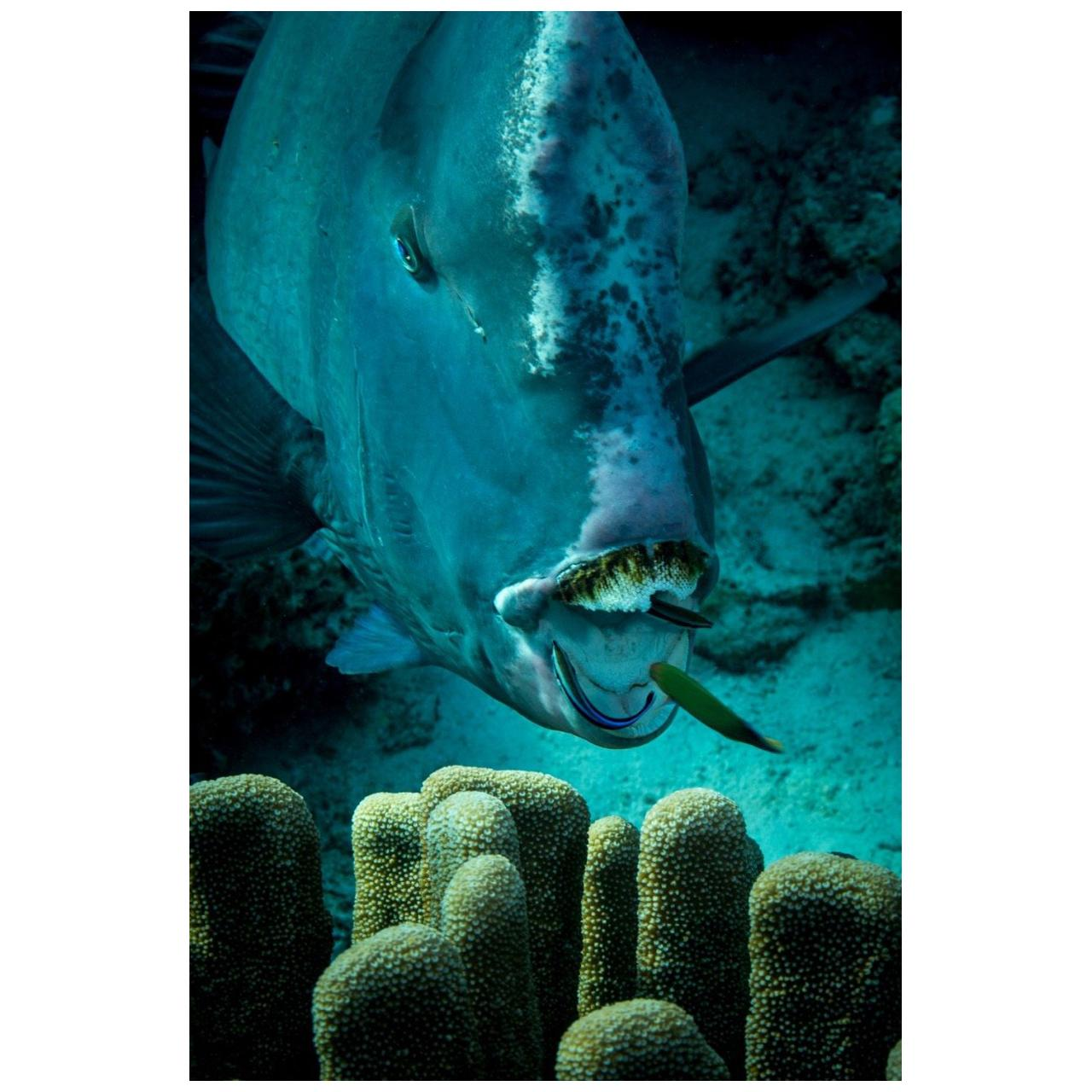 Limited Edition Underwater Photography Signed and Numbered by Michael Zaimov