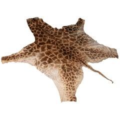 Genuine Large African Giraffe Rug
