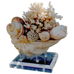 Large Shell Arrangement on Lucite Stand Centrepiece