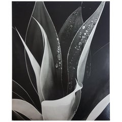 Brett Weston, Untitled 'Agave Plant with Dew', Photograph