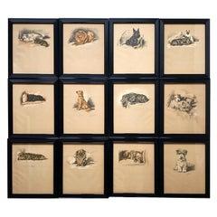 Set of Twelve 1930s Framed Lucy Dawson Dog Prints
