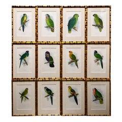 Set of Twelve 19th Century Chromolithographs of Parrots