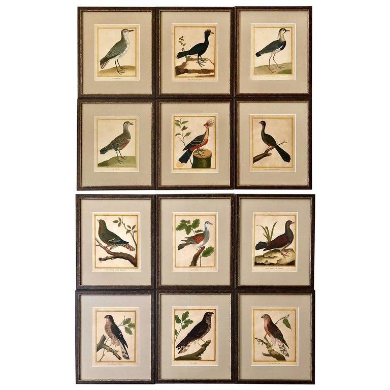 Superb Set of Twelve Martinet Bird Copper Plate Engravings