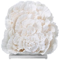 Large Merulina Coral Sculpture on Lucite