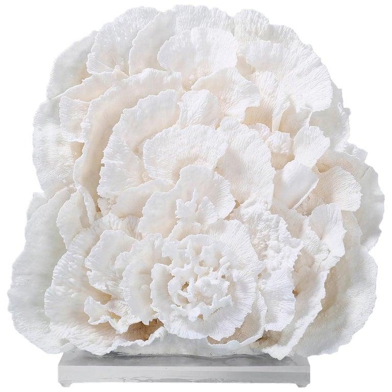 Large Merulina Coral Sculpture on Lucite For Sale