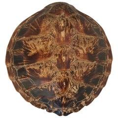 Antique Large Tortoise Shell