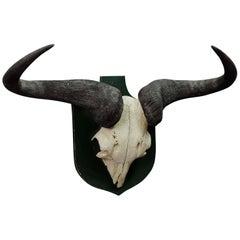Vintage African Wildebeest Trophy
