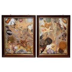 Pair of Sea Life and Shell Dioramas or Shadow Boxes