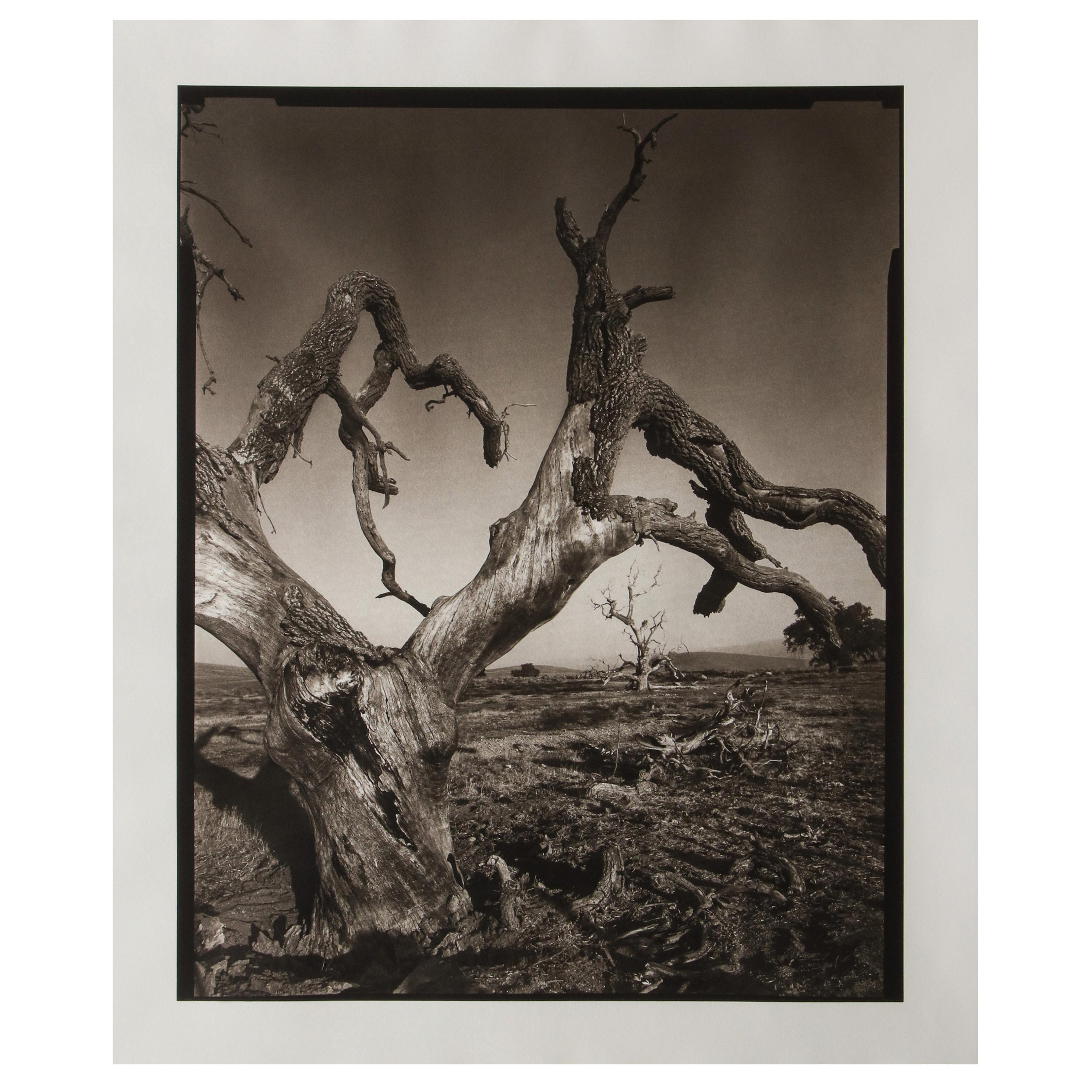 """Signed """"Tejon Ranch"""" Photograph by Mark Seliger (b. 1959)"""