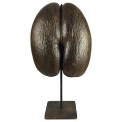 Large Coco de Mer 'Lodoicea Maldivica' Natural Sculpture Mounted on a Stand