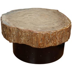 Petrified Wood Cocktail Table in the Style of Ado Chale