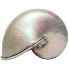 White Mother-of-Pearl Nautilus Seashell