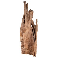 Ancient Driftwood Carving from Northern Thailand Found in the Chiang Mai Region