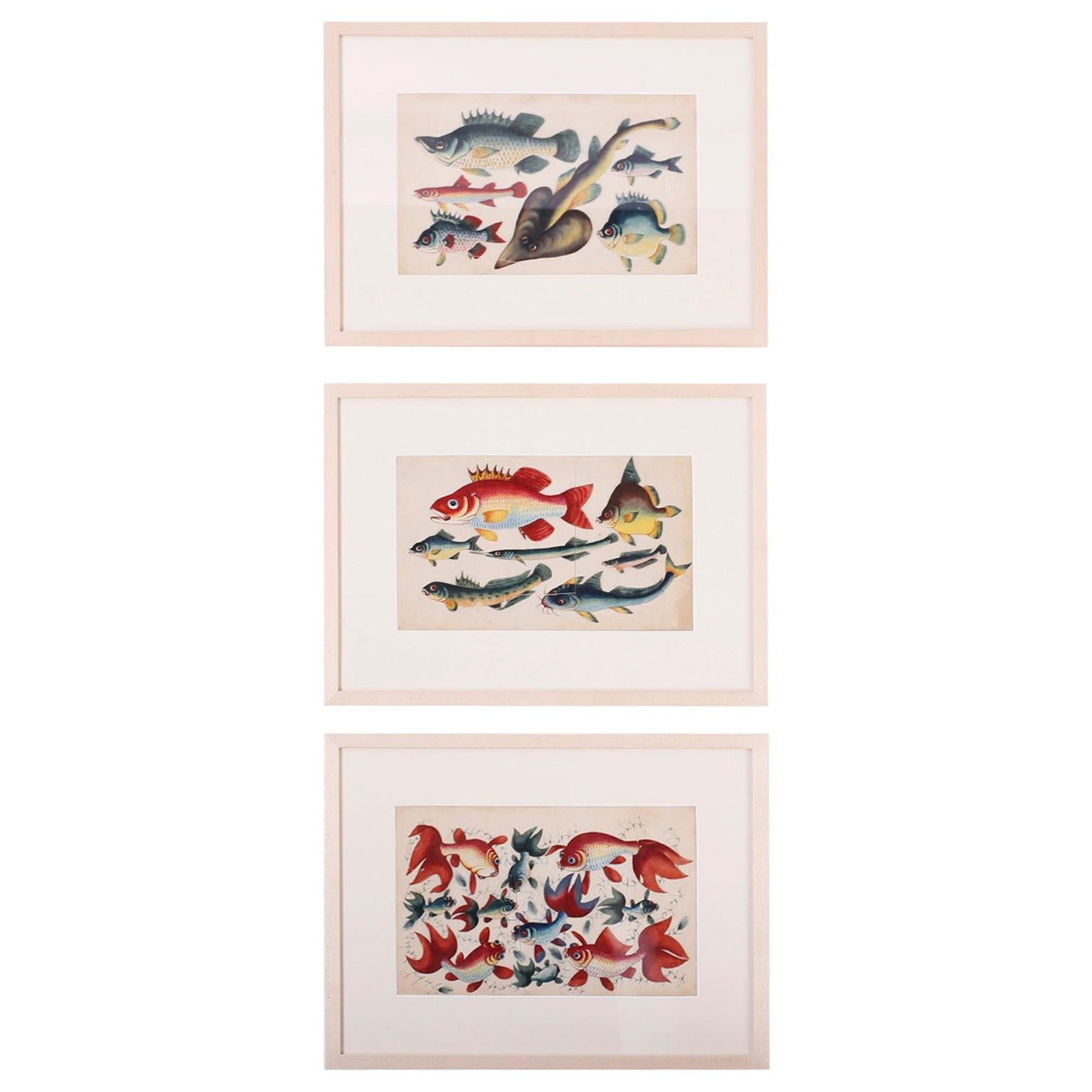 Set of Three Chinese Pith Paintings of Fish