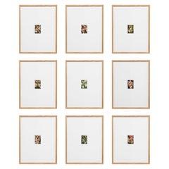 David Urbano Contemporary Set of Nine Flowers Photography the Rose Garden