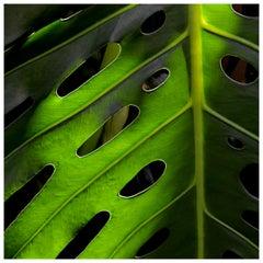 Palm's Eye by Laurel Hollis Feldman