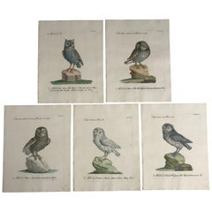 Rare Set of Five 18th Century Italian Engravings of Owls by Saverio Manetti