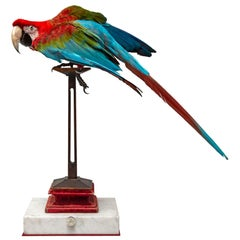 Fine Taxidermy Red-and-green Macaw I by Sinke & Van Togeren