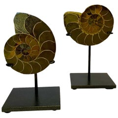 Prehistoric Madagascar Pair of Ammonite Sculptures on Stands