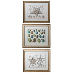 Set of 3 Sea Life Prints