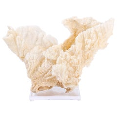 Large Sea Sponge Sculpture on Lucite