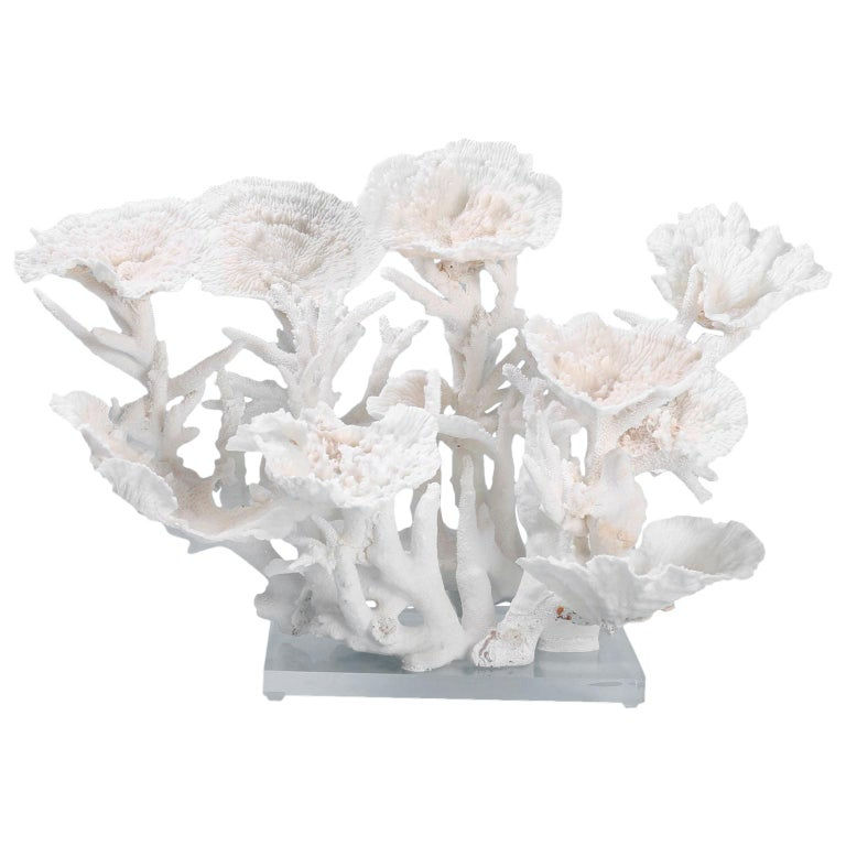 Large White Coral Sculpture For Sale