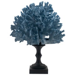 Blue Coral Mounted