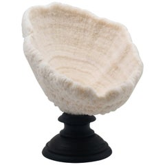 Urn Coral Mounted