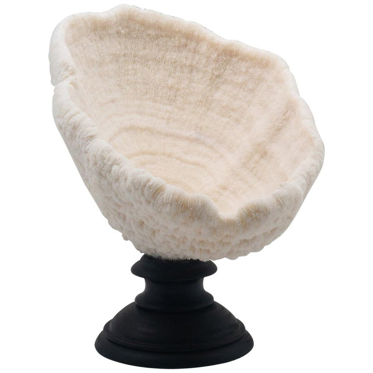 Urn Coral Mounted For Sale