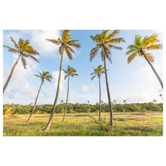 Palm Land, St. Lucia Palm Tree Landscape Photography