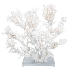Large White Coral Sculpture on Lucite