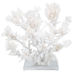 Large White Coral Sculpture