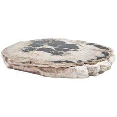 Petrified Wood Slate Slice or Tabletop Polished