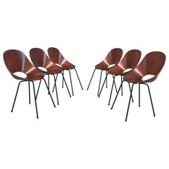 6 Medea Chairs by Vittorio Nobili