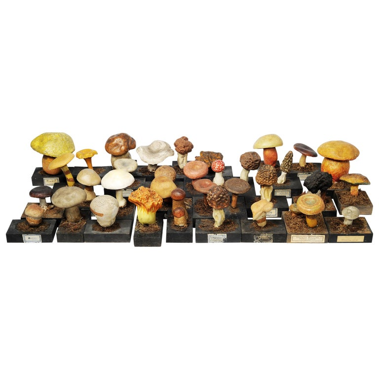 20th Century Wood and Painted Plaster Czech Mushroom Botanical Models circa 1920 For Sale