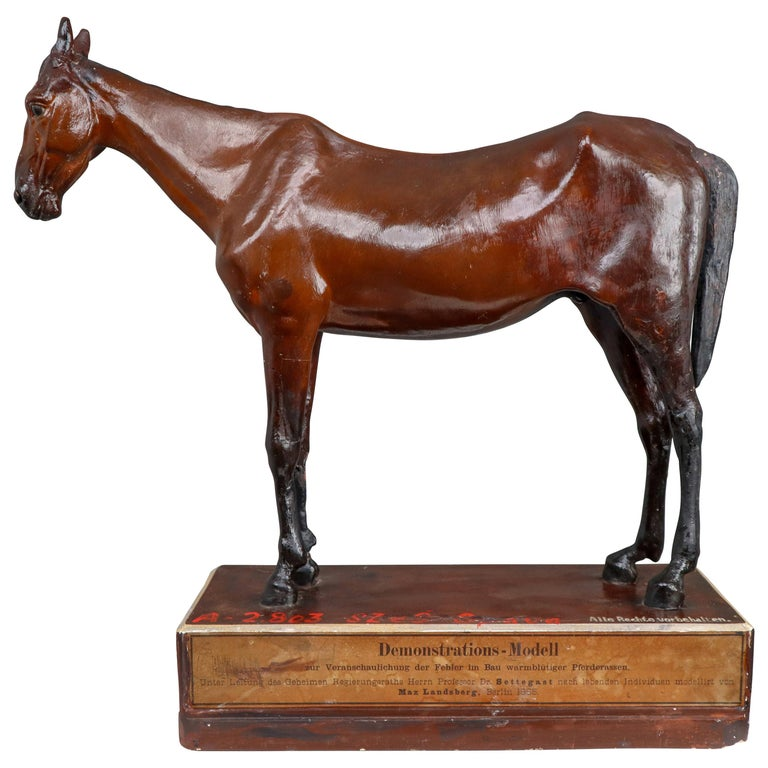 Warm-Blooded Horse Model in Painted Plaster by Max Landsberg, Berlin, 1885 For Sale
