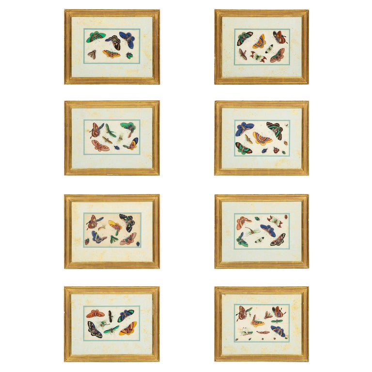 Set of Eight Chinese Rice Paper Paintings of Butterflies and Insects For Sale