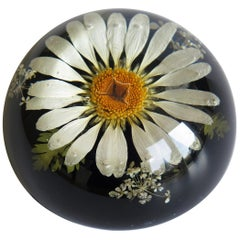 Daisy Paperweight Handmade with Real Flowers by Sarah Rogers, English