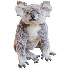 Koala Taxidermy