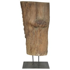 Large Old Burl Tree Trunk Mounted as Sculpture