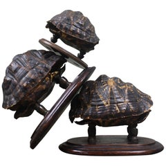19th Century Trio of Tortoise Specimens Taxidermy Victorian Curiosity