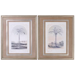 Pair of Framed and Matted Palm Tree Lithographs
