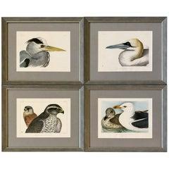 Rare Set of Four Blackburn Birds Lithographs