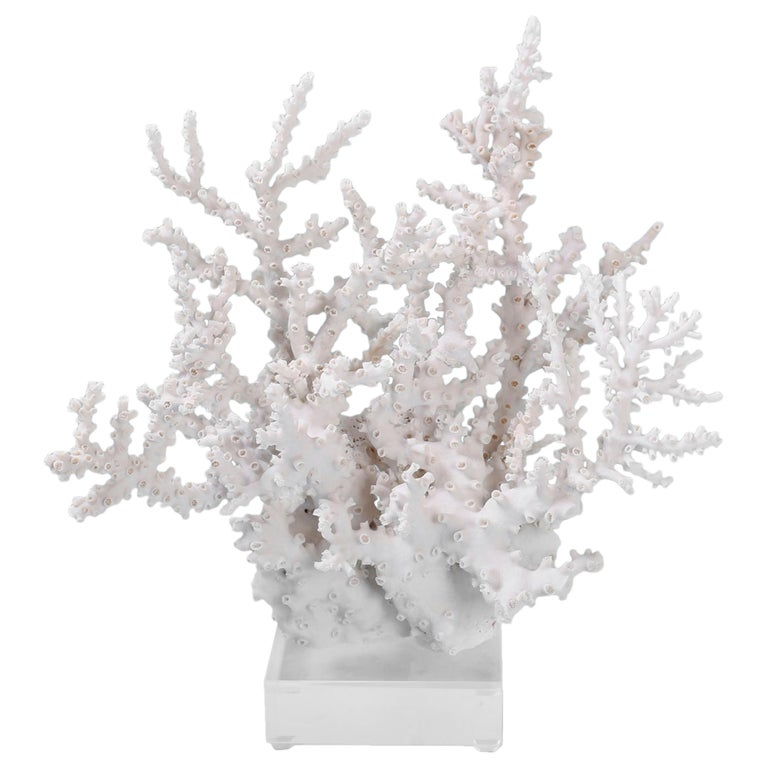Octopus Coral Specimen on Lucite For Sale