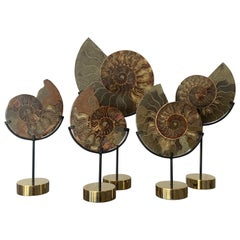 Set of Five Ammonite Fossils on Brass Base