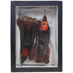 Mid-20th Century Taxidermy Cased Pair of Rufus Hummingbirds 'Selasphorus Rufus'