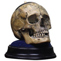 Memento Mori Human Skull Bone Tobacco Jar with Rhyme Masonic Freeman's
