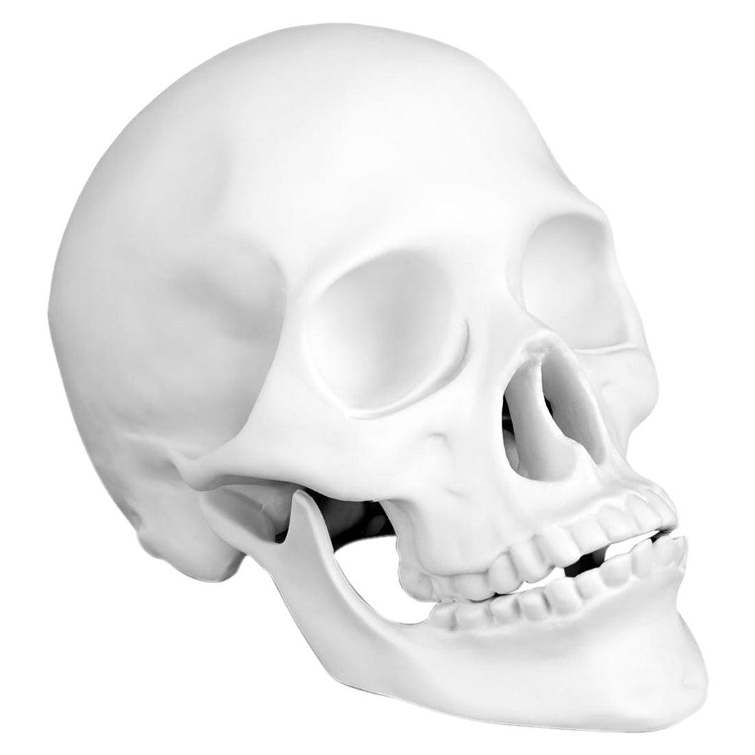 Skull White Porcelain Sculpture